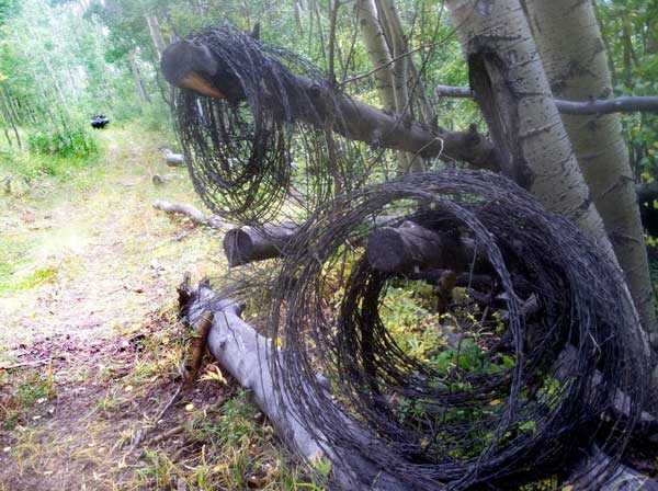 Old Barbed Wire Fencing